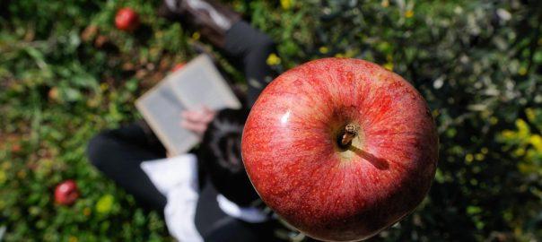 mela di newton